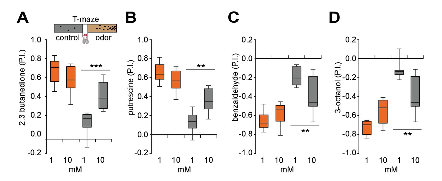 Inhibition Of Oxidative Stress In Cholinergic Projection Neurons Figure 2 Well Than The First Circuit Older Flies Show Strongly Improved Behavior To Higher Odor Concentrations
