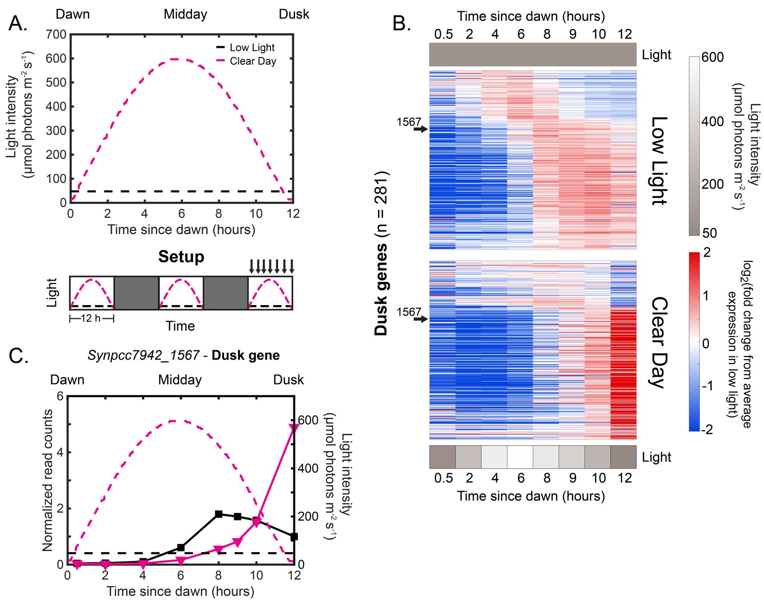 Natural changes in light interact with circadian regulation
