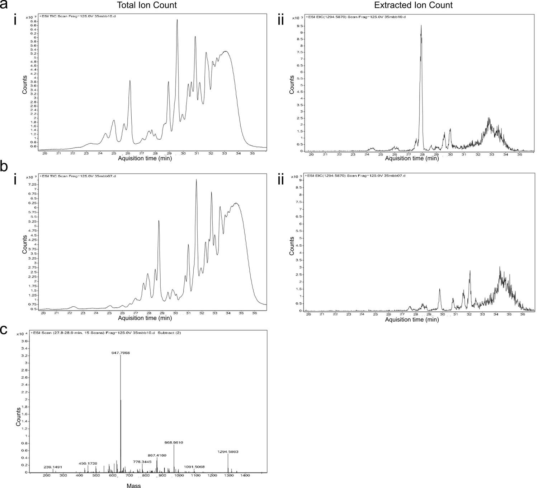 Molecular coordination of Staphylococcus aureus cell division | eLife