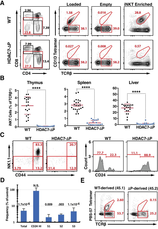 Histone Deacetylase 7 Mediates Tissue Specific Autoimmunity Via