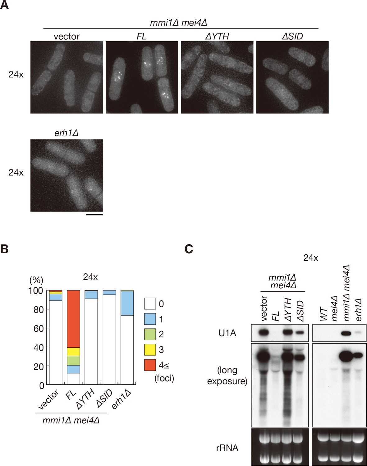 YTH-RNA-binding protein prevents deleterious expression of meiotic