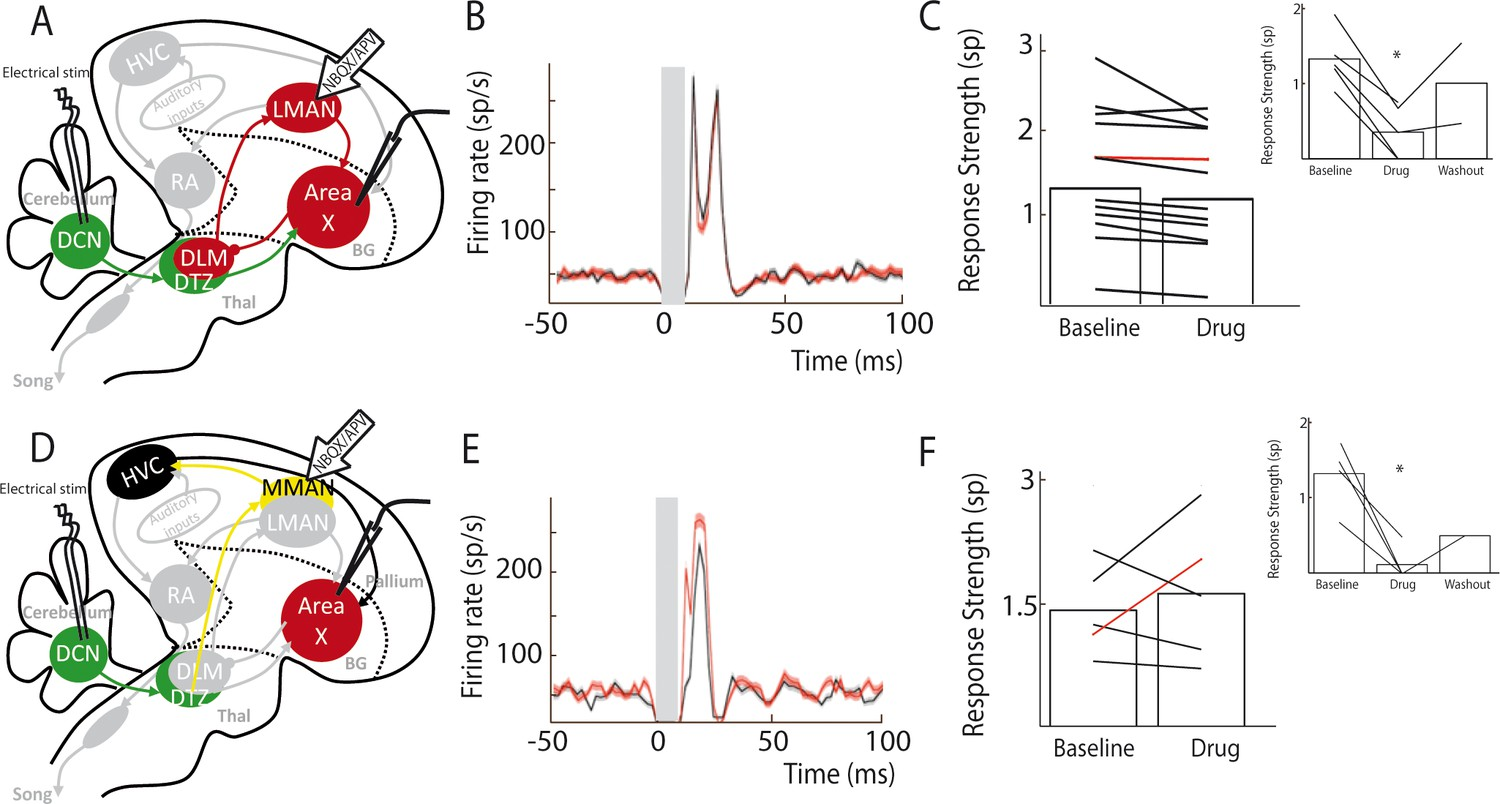 A Subcortical Circuit Linking The Cerebellum To Basal Ganglia Control Input Notes Time Delay Circuits Recovery Area X Pallidal Responses Dcn Stimulation Are Not Transmitted Through Cortical Nuclei Lman Or Mman