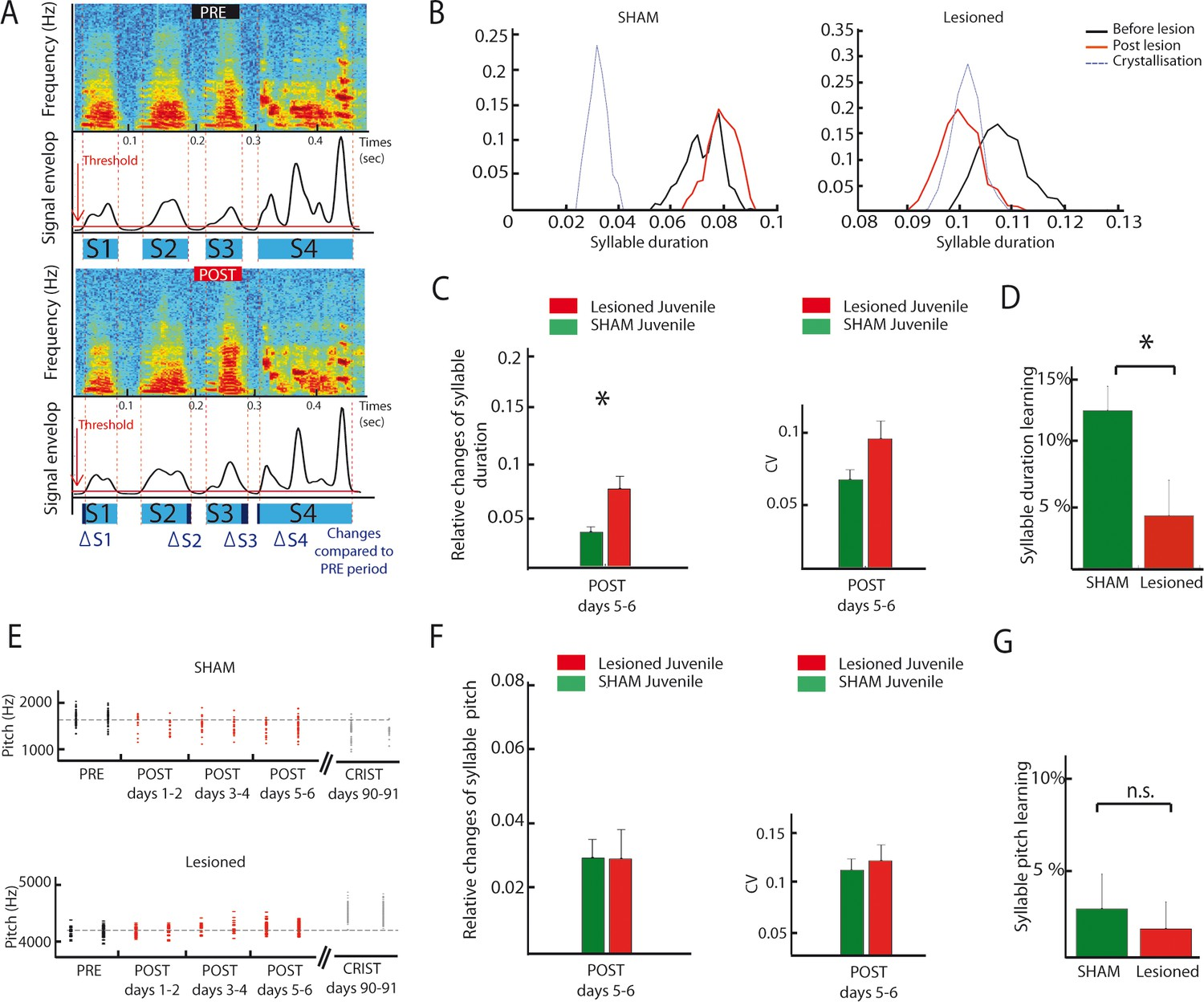 A Subcortical Circuit Linking The Cerebellum To Basal Ganglia Envelope Detector One Week Dcn Lesions Effects On Syllable Duration And Fundamental Frequency In Juvenile Zebrafinches