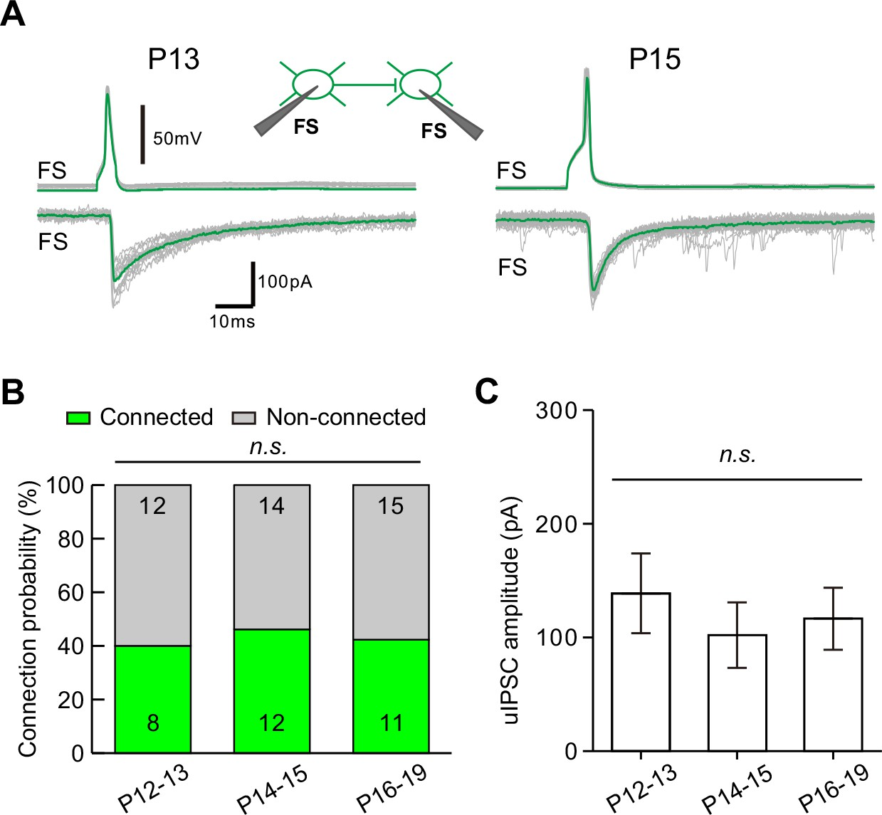 Eye Opening Differentially Modulates Inhibitory Synaptic Open Parallel Circuit Diagram Transmission From Fs Ins Onto Does Not Change During