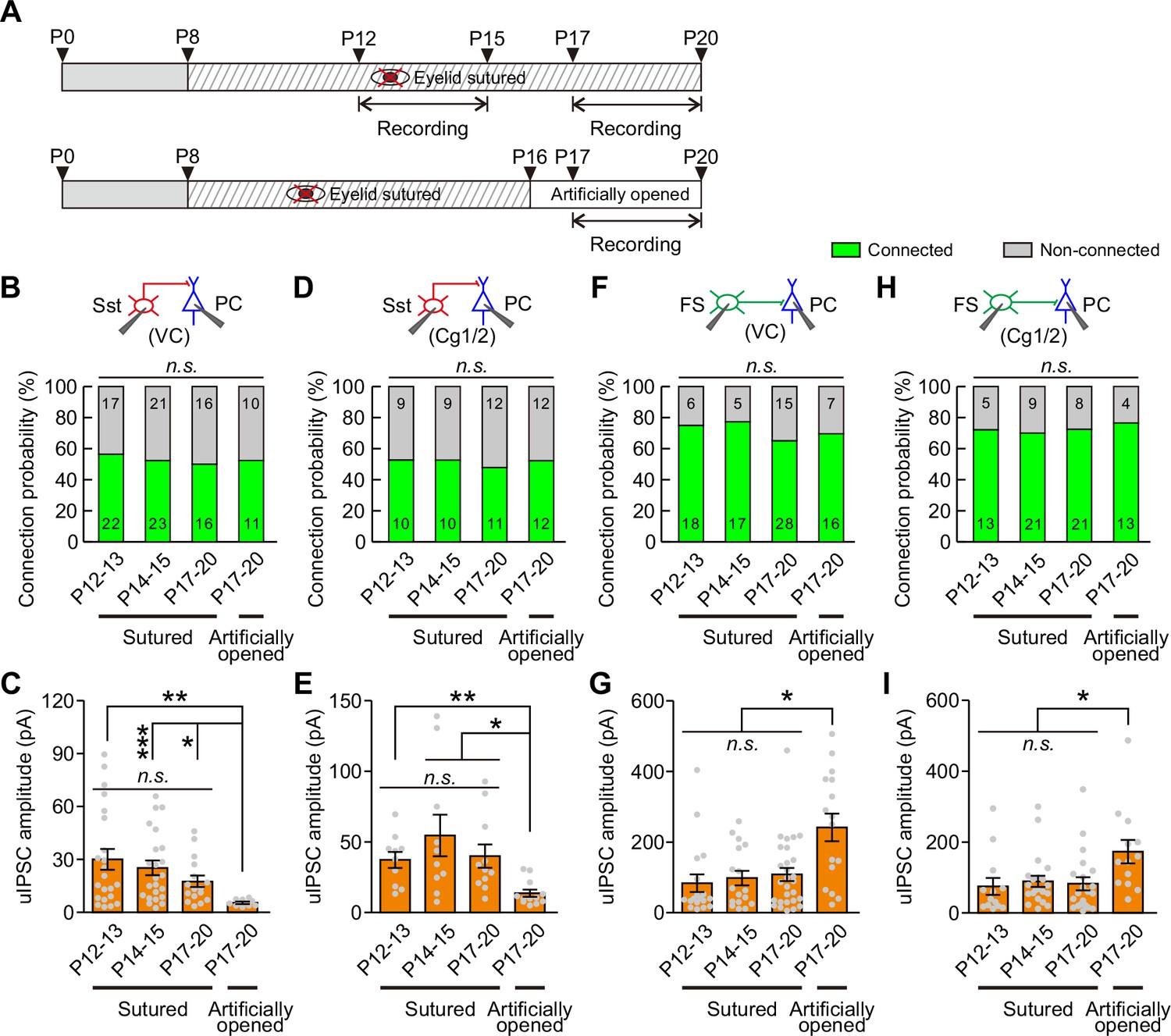 Eye Opening Differentially Modulates Inhibitory Synaptic In The Above Circuit When Toggle Switch Is Open As Shown 12 Strength Of Transmission From Sst Ins To Pcs And Fs