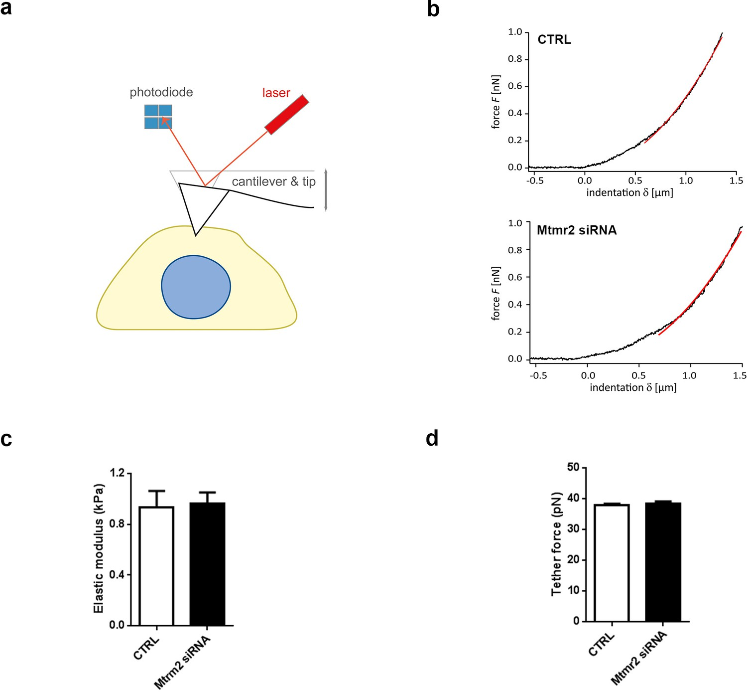 Myotubularin Related Protein 2 And Its Phospholipid Substrate Pip2 Cantilever Diagram Registration To Strength The Pdf Mtmr2 Knockdown Does Not Obviously Alter Mechanical Properties Of Cultured Drg Neurons