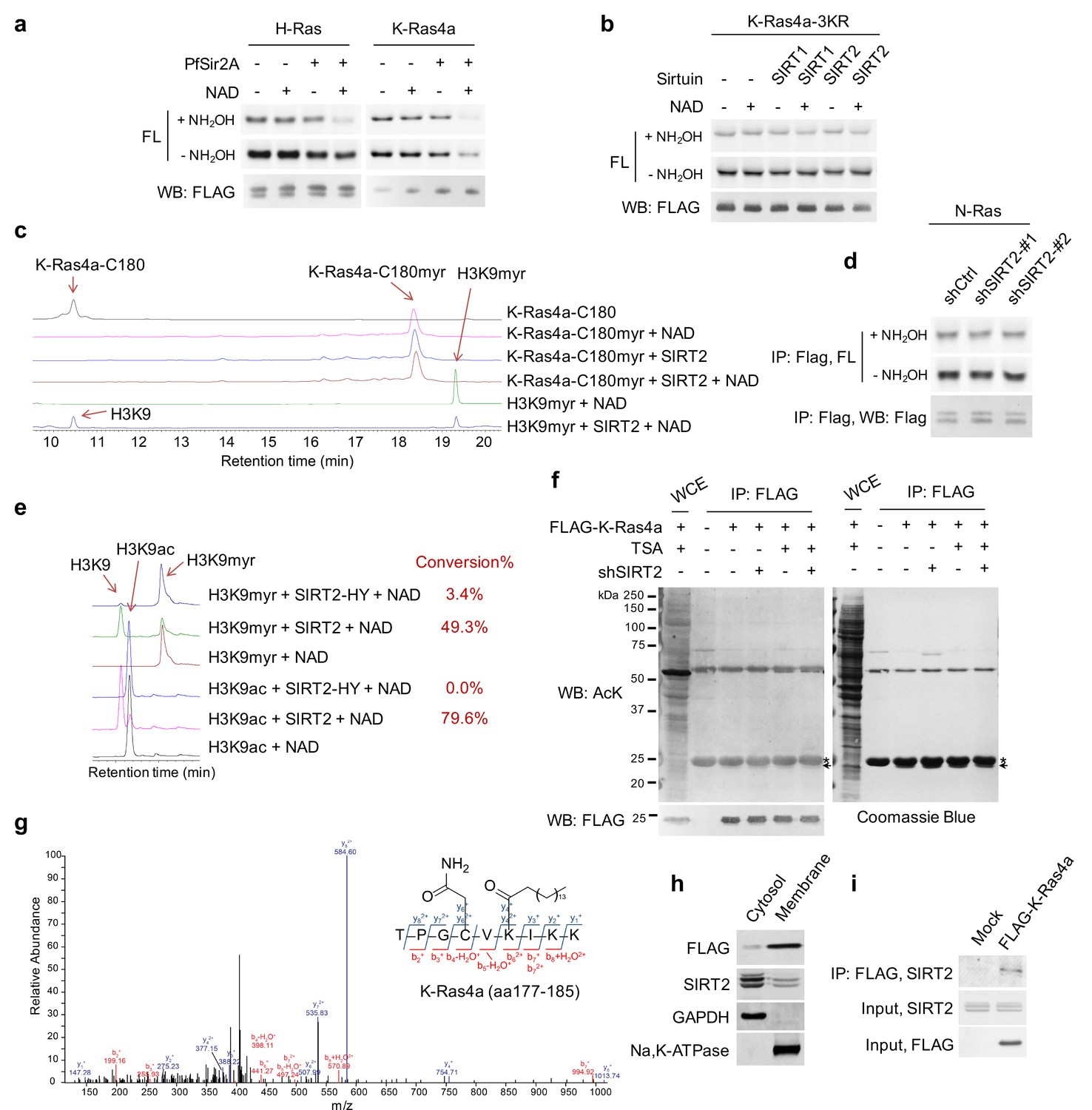 SIRT2 and lysine fatty acylation regulate the transforming activity