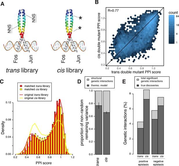Cis and trans genetics-3877