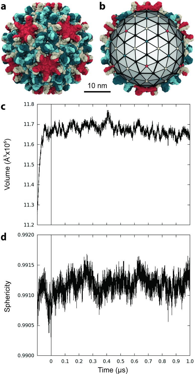All Atom Molecular Dynamics Of The Hbv Capsid Reveals Insights Into Look Through Simulation Animation H Bridge Driver Circuit Size Stability And Morphology