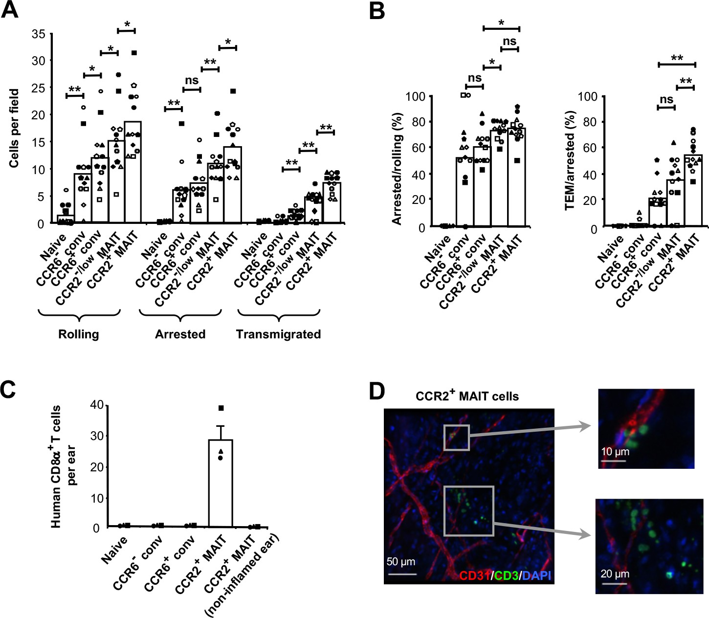 C/EBPδ drives interactions between human MAIT cells and