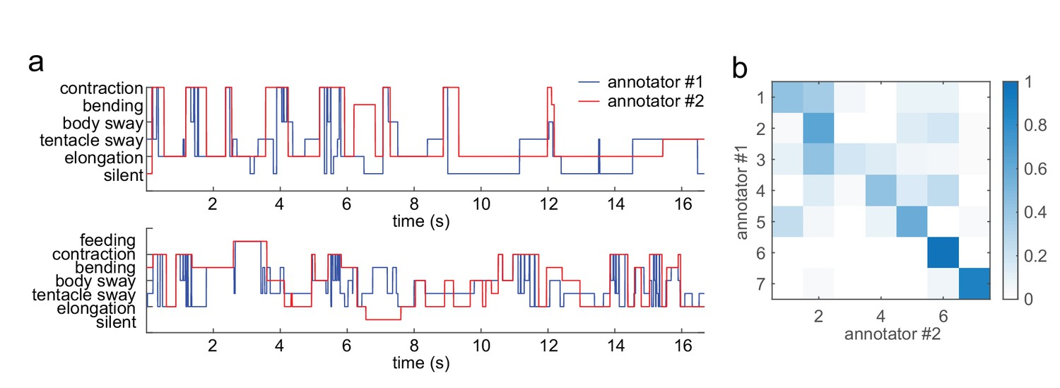 Comprehensive machine learning analysis of Hydra behavior reveals a