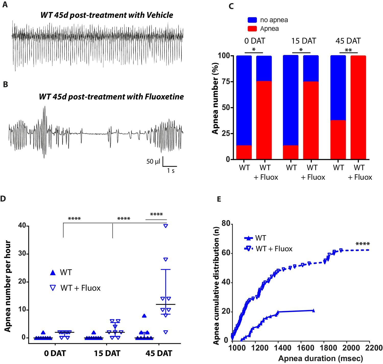 Necdin Shapes Serotonergic Development And Sert Activity Modulating 94 Vmax 1200 Wiring Diagram Early Life Treatment Of Fluoxetine On Respiratory Apnea In Wild Type Mice