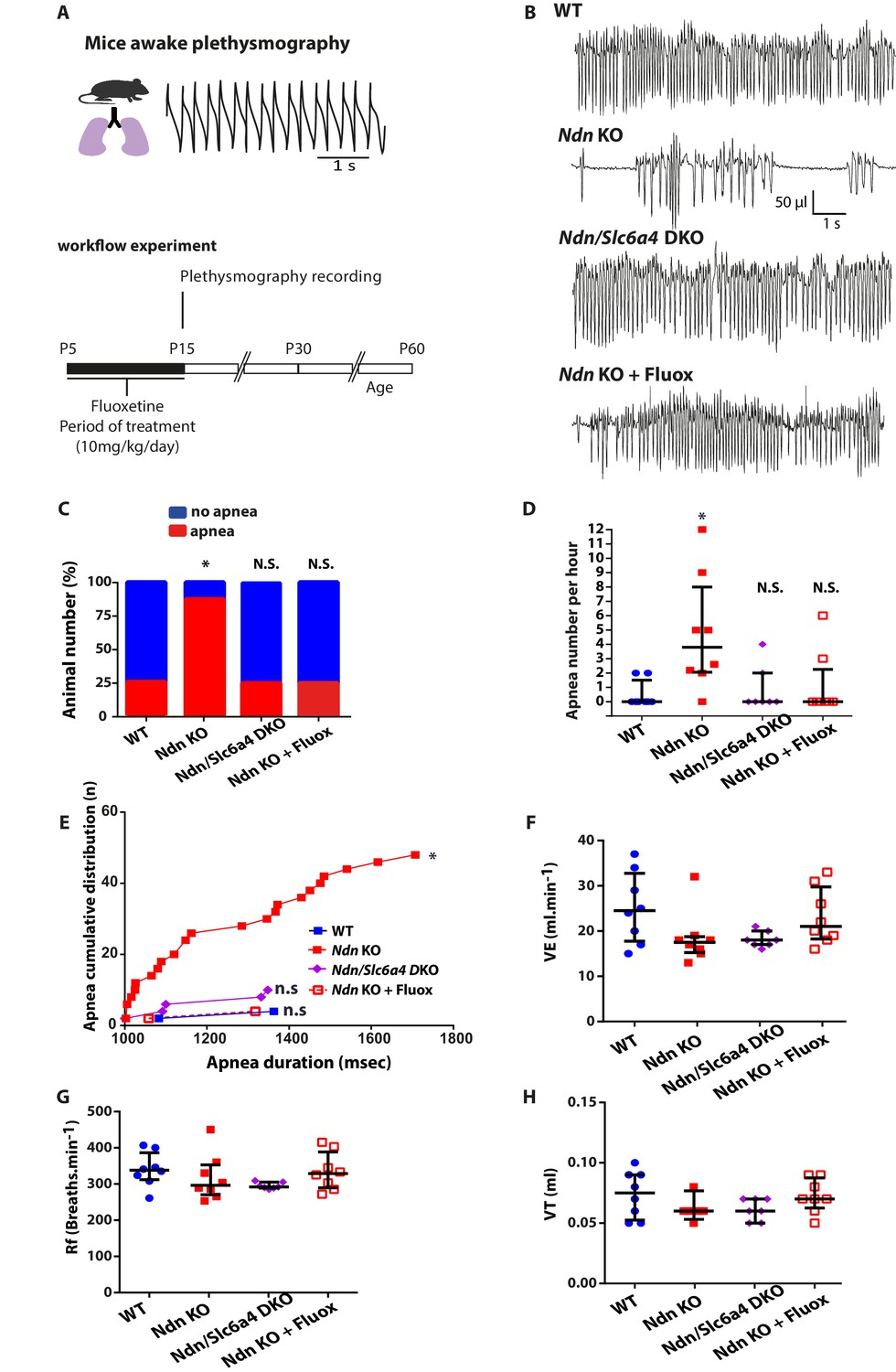 Necdin Shapes Serotonergic Development And Sert Activity Modulating 94 Vmax 1200 Wiring Diagram Genetic Ablation Or Pharmacologic Inhibition Of Suppresses Apnea Rescues Central Chemoreflex In Ndn Ko Mice