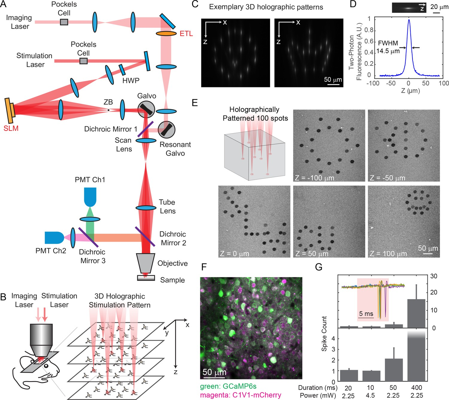 Imaging Approaches Expand View Into >> Simultaneous Two Photon Imaging And Two Photon Optogenetics Of