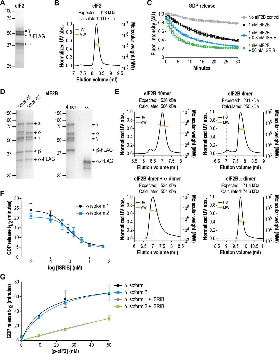 The Small Molecule Isrib Rescues Stability And Activity Of Free Information Society Geiger Counter Electronic Circuit Schematic Eif2b Isoforms Have Identical Gef Alters Sensitivity To Eif2 Phosphorylation