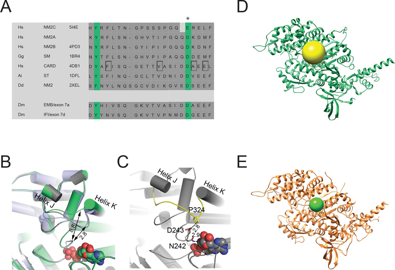 Mechanistic insights into the active site and allosteric ...