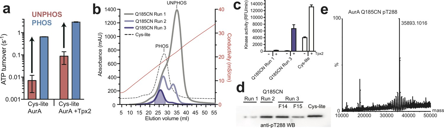 enzyme assay-spectrophotometric Gentamicin, sold under brand names garamycin among others, is an antibiotic used to treat several types of bacterial infections this may include bone infections, endocarditis, pelvic inflammatory disease, meningitis, pneumonia, urinary tract infections, and sepsis among others.