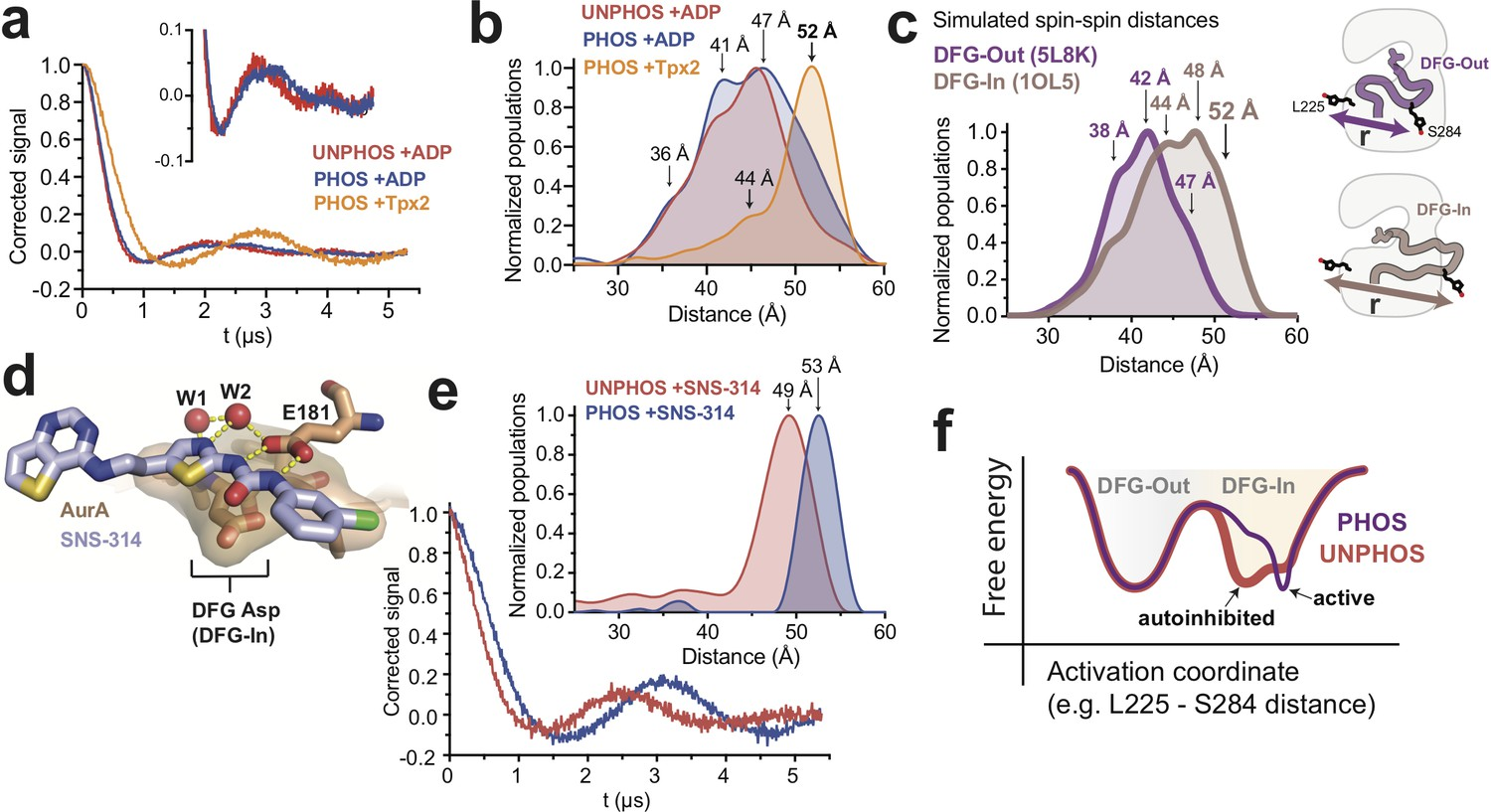 A dynamic mechanism for allosteric activation of Aurora