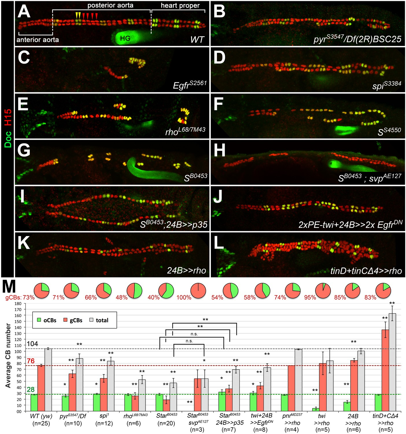 Genetic Manition Of Egf But Not Fgf Signaling Leads To Cardioblast Subtype Specific Heart Defects