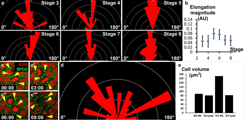 Jak-Stat pathway induces Drosophila follicle elongation by a