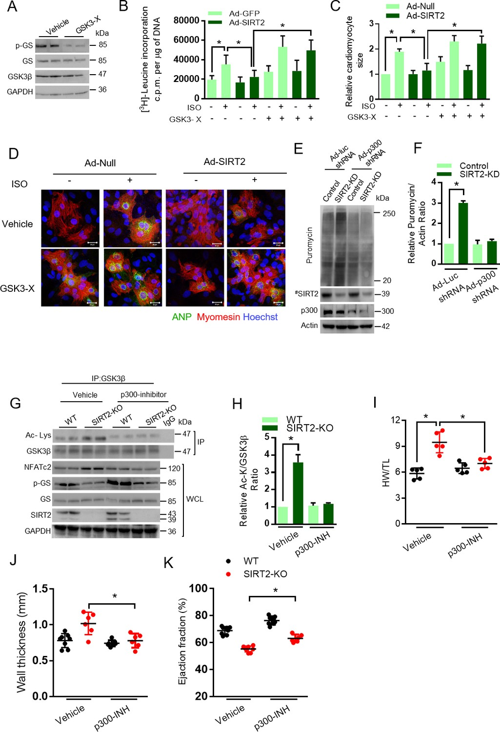 Sirt2 Deacetylase Regulates The Activity Of Gsk3 Isoforms How To Build 12 Stage Neon Sequencer Ne 2 51 Is Required For Anti Hypertrophic Role