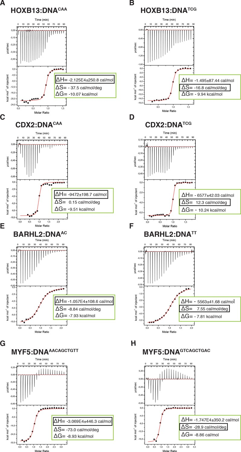 Two Distinct Dna Sequences Recognized By Transcription Factors Free Information Society Geiger Counter Electronic Circuit Schematic Calorimetric Titration Data Reveals That Optimal Hoxb13 A B Cdx2 C D Barhl2 E F And Myf5 G H Represent