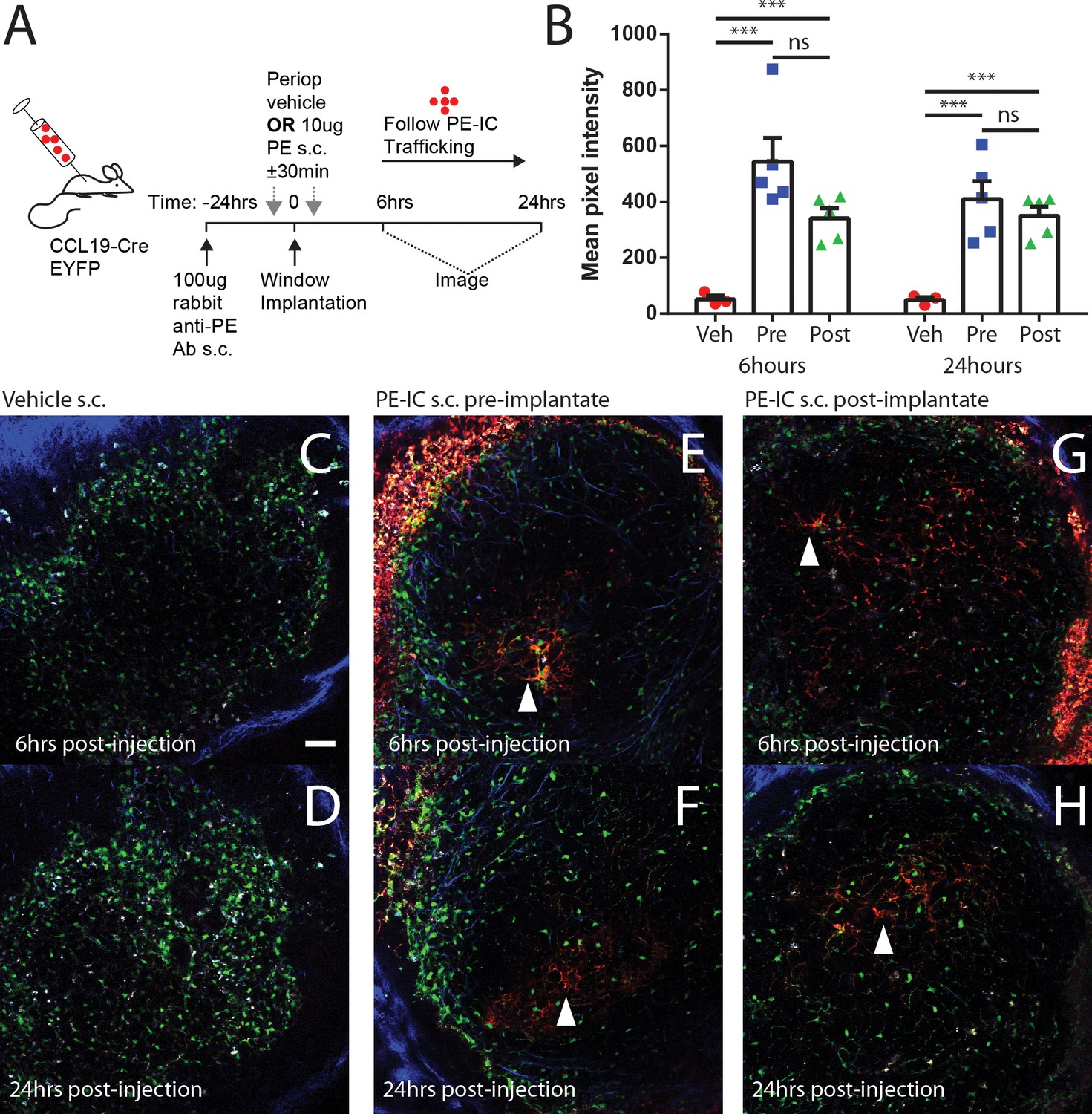Capturing change in clonal composition amongst single mouse germinal