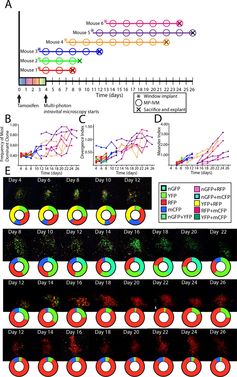 Capturing change in clonal composition amongst single mouse germinal ...