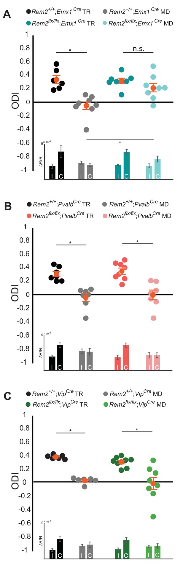 Rem2 Stabilizes Intrinsic Excitability And Spontaneous Firing In R Rc Circuit Diagram Is Required Cortical Excitatory Neurons For Ocular Dominance Plasticity