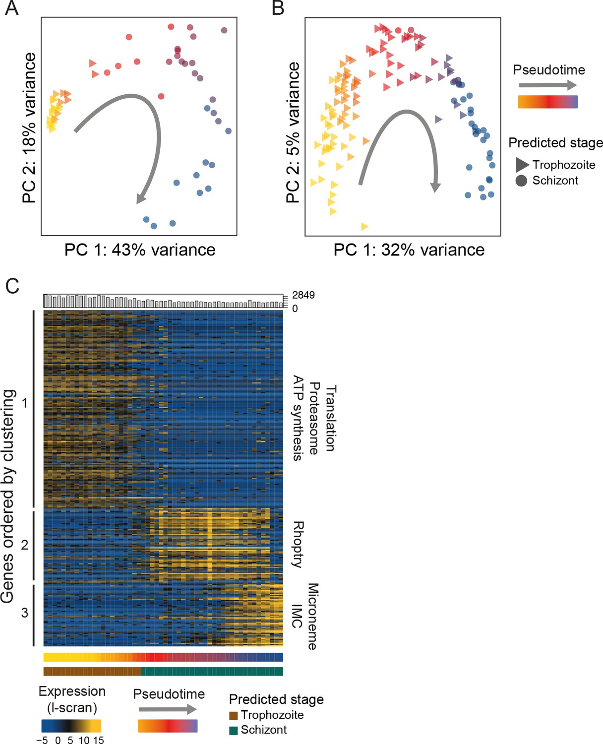 Single-cell RNA-seq reveals hidden transcriptional variation