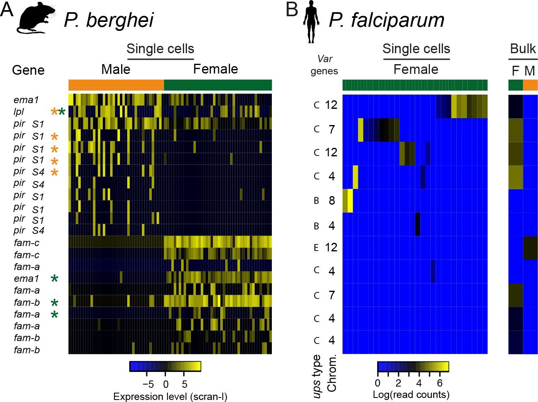 Single-cell RNA-seq reveals hidden transcriptional variation in