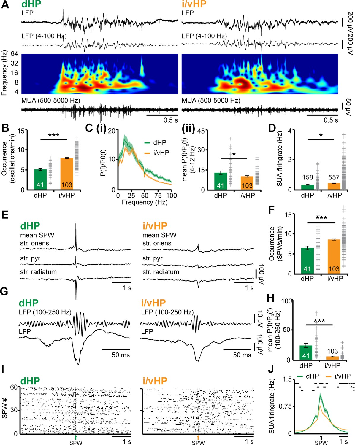 Glutamatergic Drive Along The Septo Temporal Axis Of Hippocampus Electric Blanket Wiring Diagram Besides Circuit Patterns Discontinuous Oscillatory Activity In Ca1 Area Neonatal Dhp And I Vhp Vivo