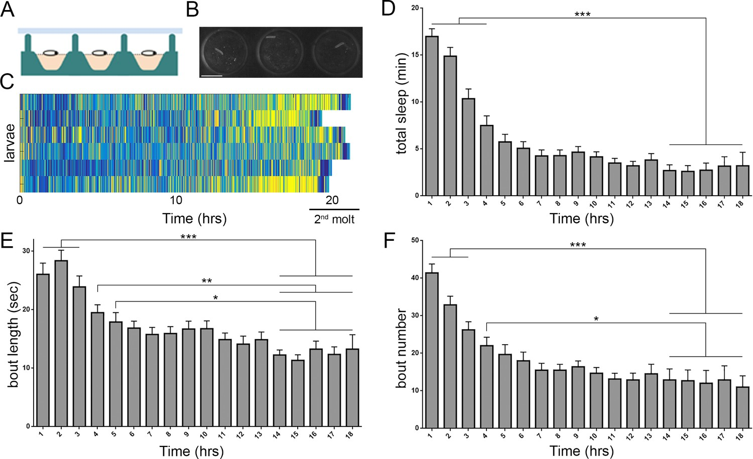 A sleep state in Drosophila larvae required for neural stem cell