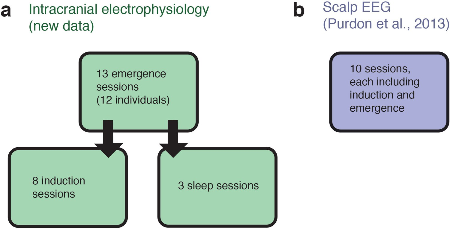 Figures and data in A transient cortical state with sleep
