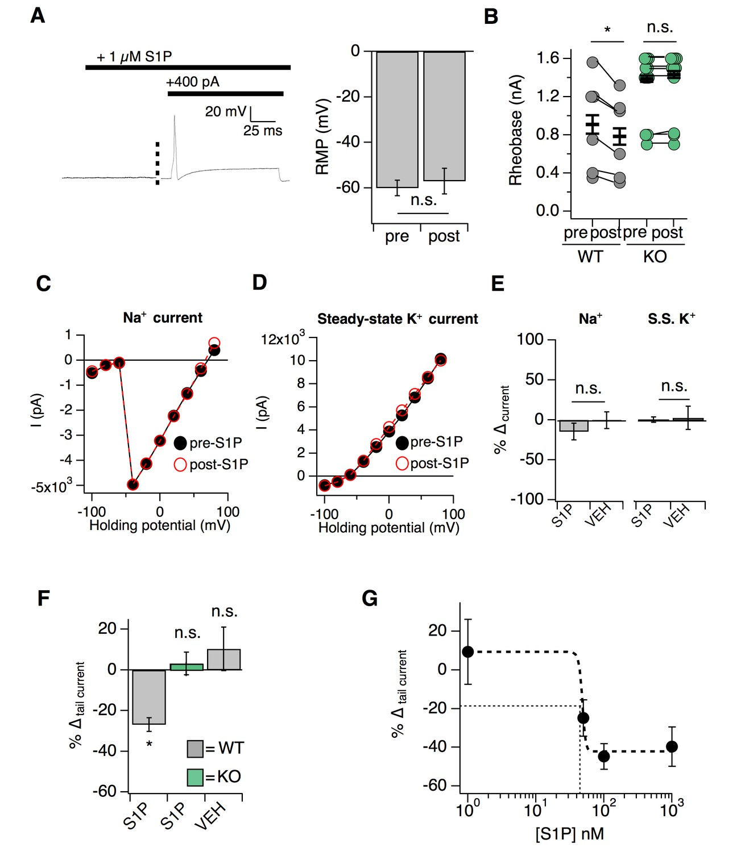 The signaling lipid sphingosine 1-phosphate regulates