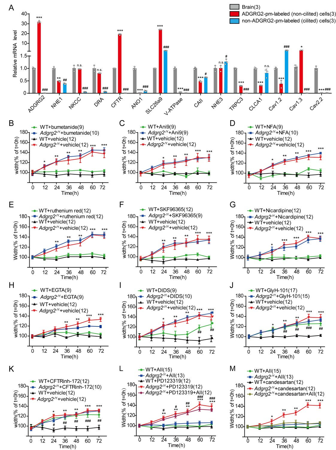 Gq Activity And Arrestin 1 Scaffolding Mediated Adgrg2 Cftr Ji Zhi Tang Jiang Inhibition Of In The Efferent Ductules Pheno Copied Y Mice