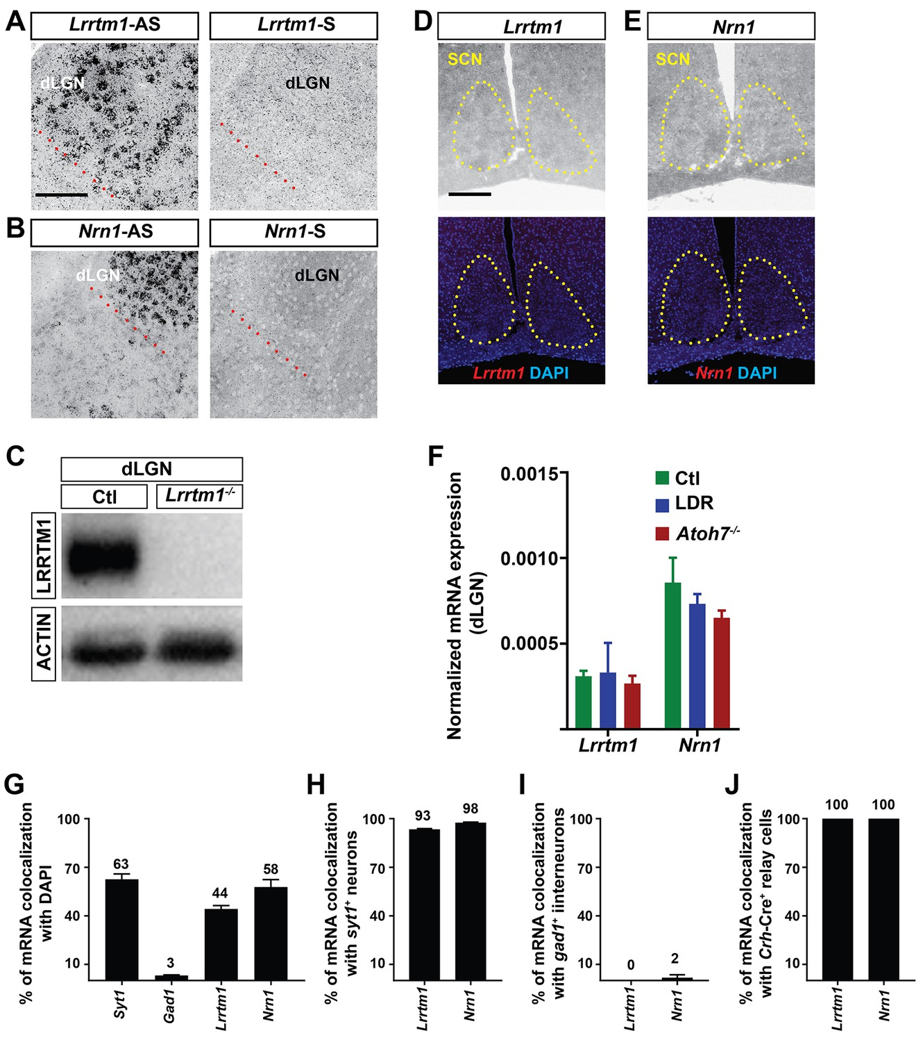 Lrrtm1 Underlies Synaptic Convergence In Visual Thalamus Elife Light Operated Relay Circuit D Mohankumar Ldr Region And Cell Specific Expression Of Nrn1