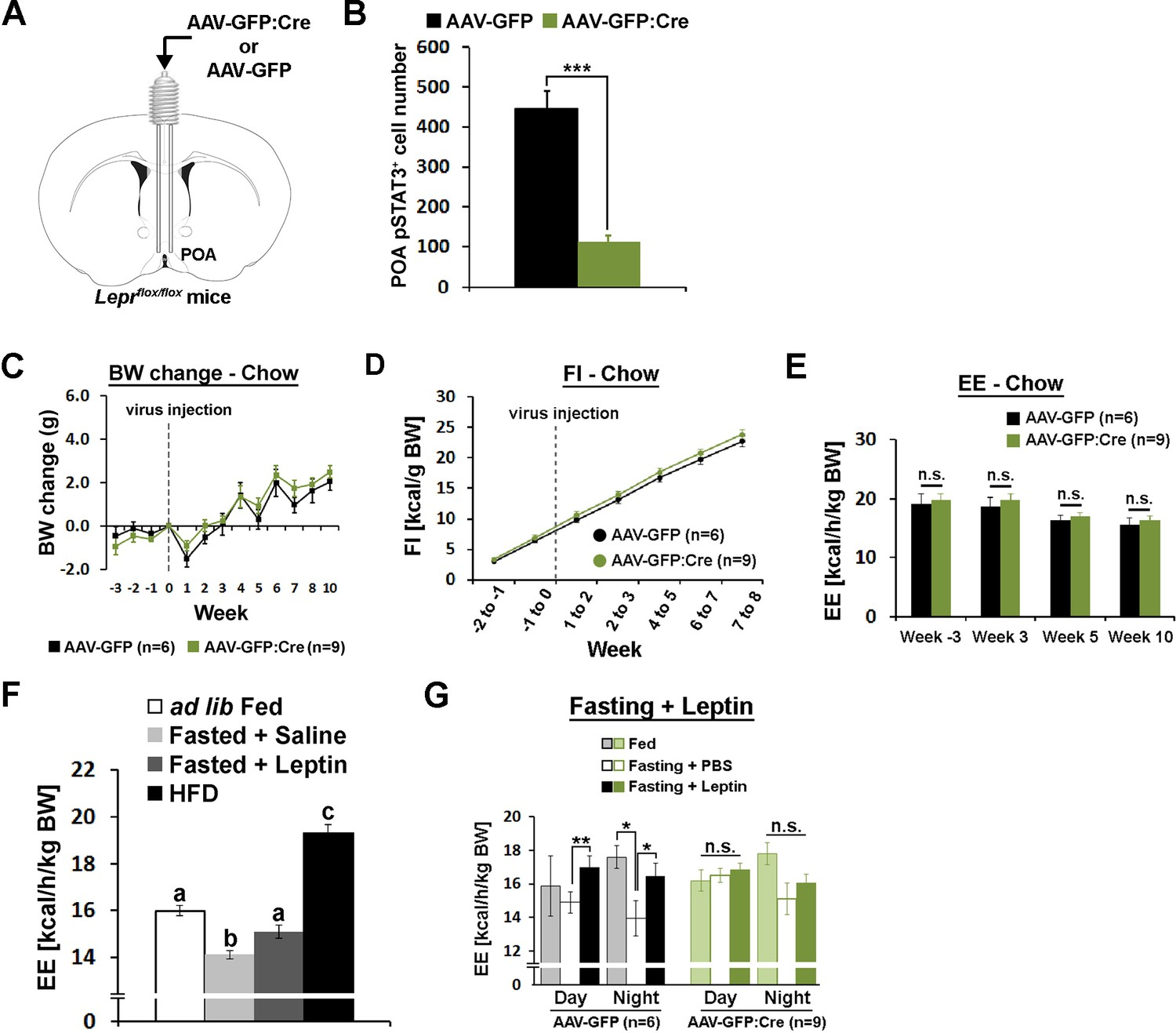 Preoptic Leptin Signaling Modulates Energy Balance Independent Of Form Below To Delete This Circuit Board Recycling Image From Our Index Poa Lepr Is Necessary For Fasting Induced Hypometabolism