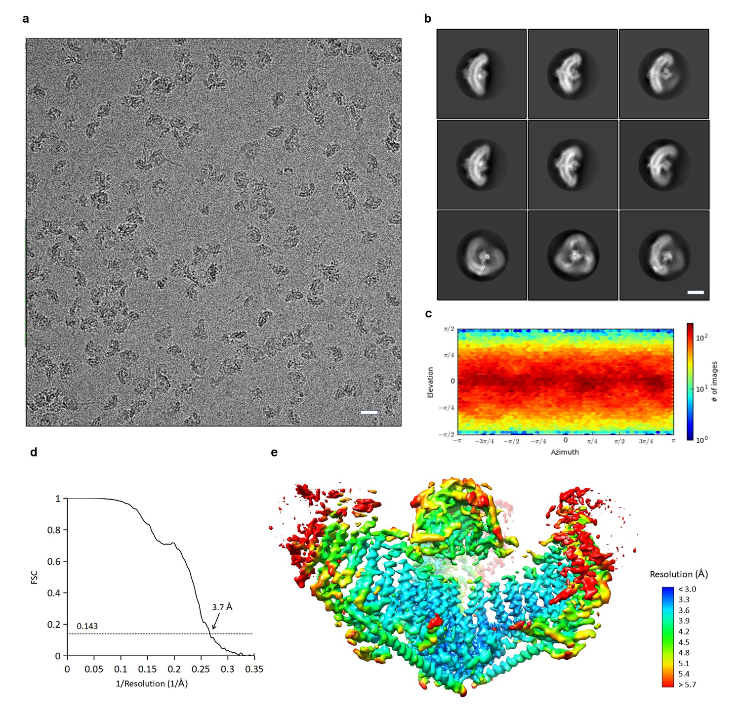 Structure Based Membrane Dome Mechanism For Piezo Mechanosensitivity Go Back Gt Gallery Labeled Eukaryotic Cell Cryoem Determination Of Mpiezo1