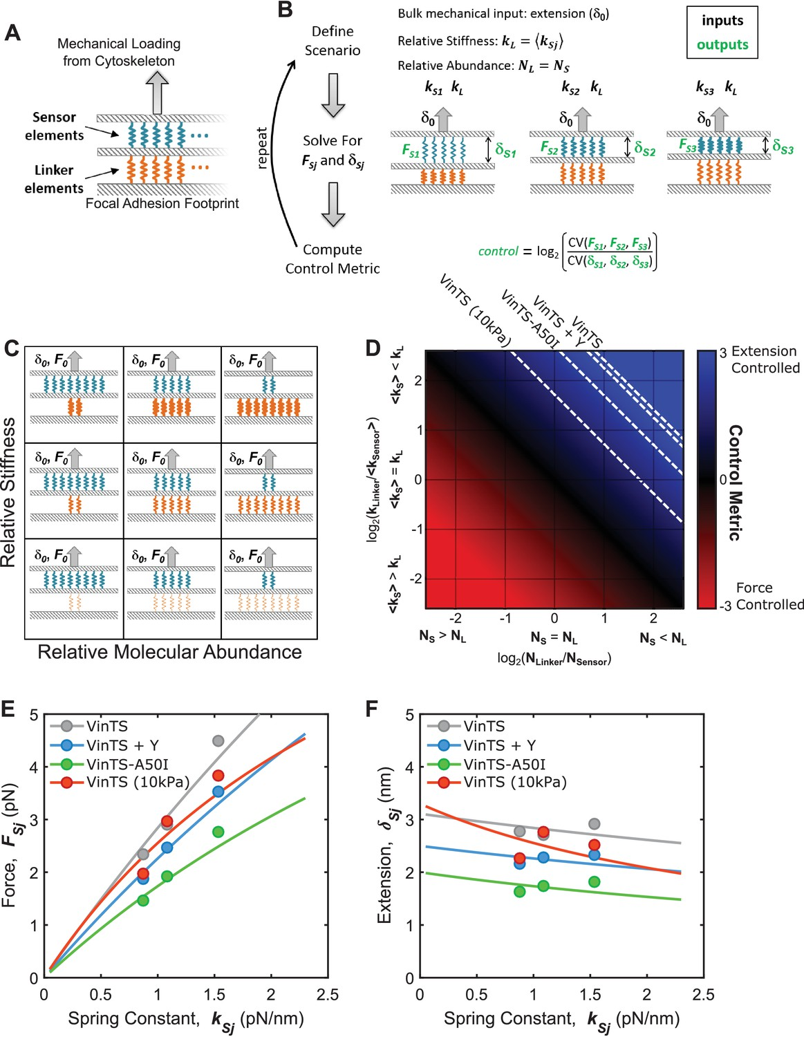 Tunable molecular tension sensors reveal extension-based control of