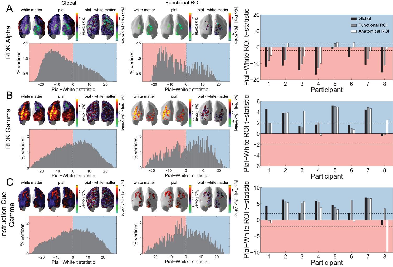 Lamina-specific cortical dynamics in human visual and sensorimotor