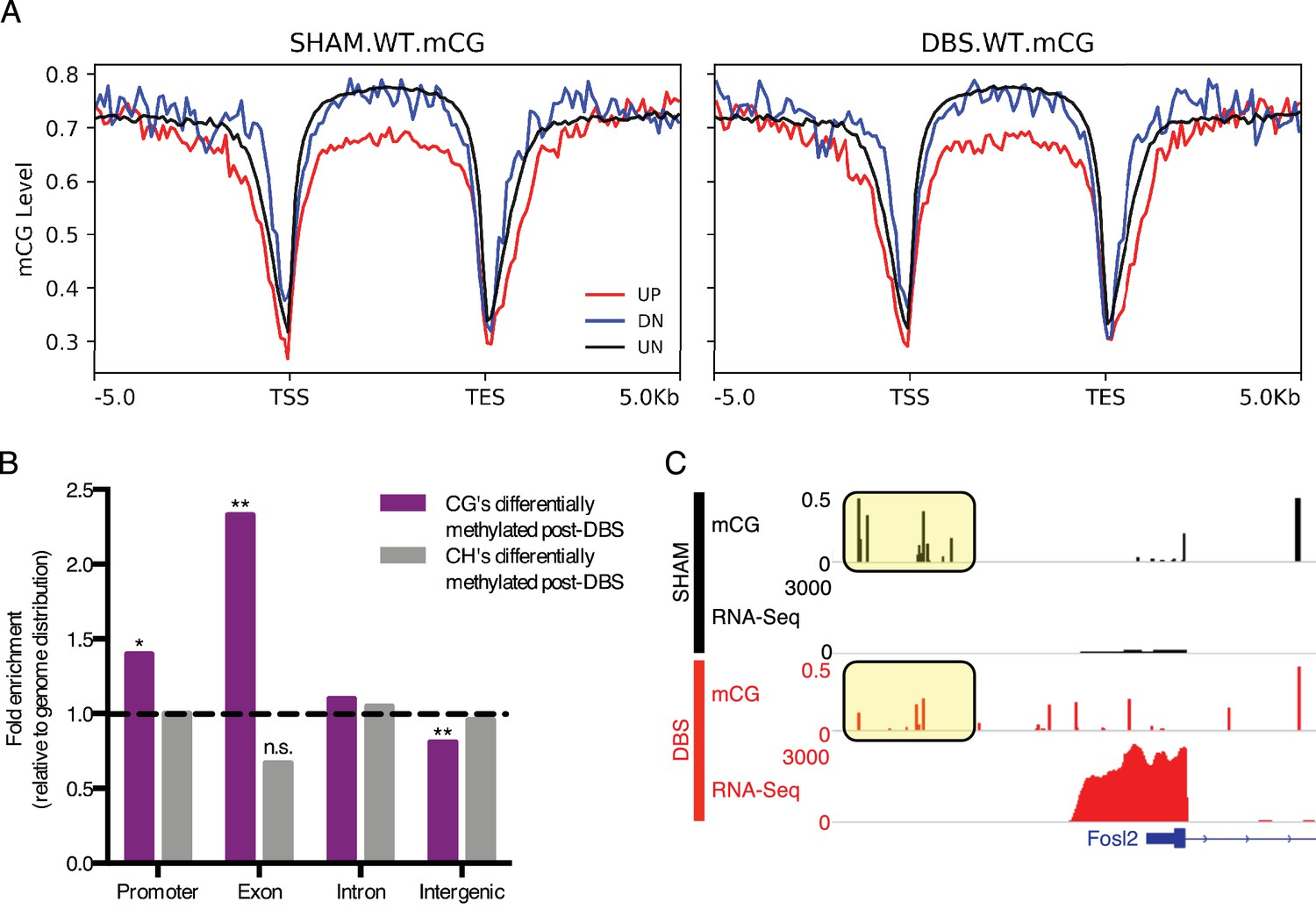 Forniceal Deep Brain Stimulation Induces Gene Expression And Text Transcribed For Accessibility Given A Parallel Electric Circuit Dbs Induced Transcription Splicing Changes Show Unique Methylation Patterns