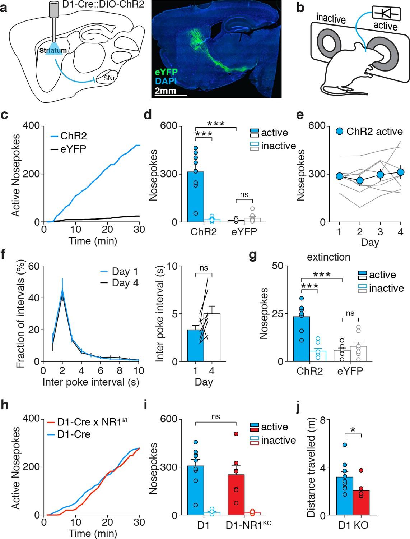 Motor thalamus supports striatum-driven reinforcement | eLife