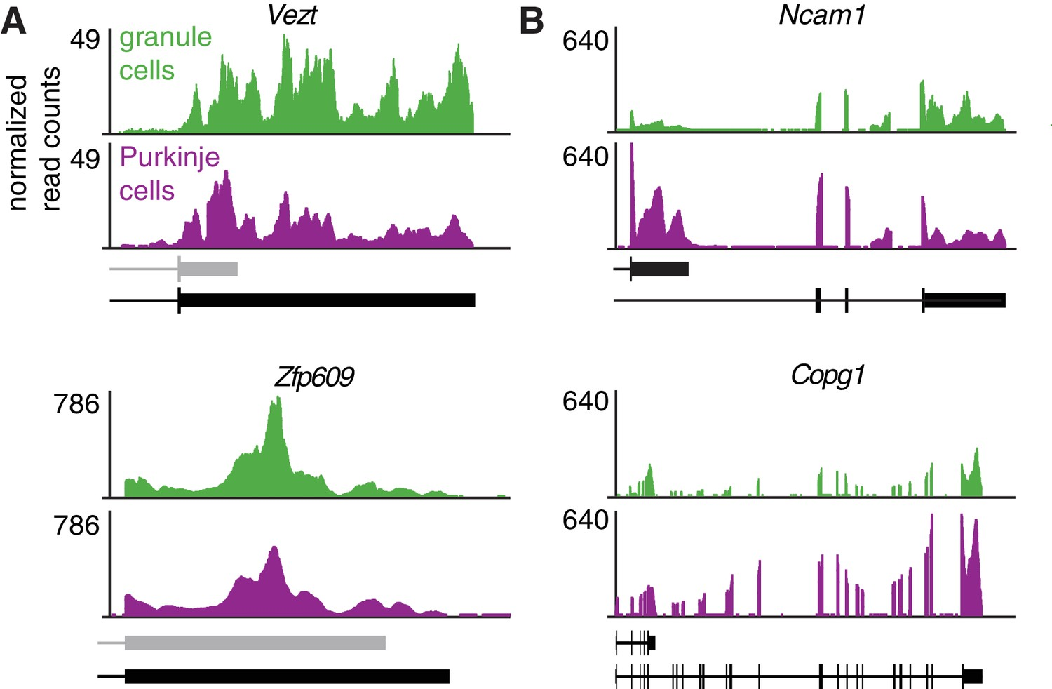 Differential 3' processing of specific transcripts expands
