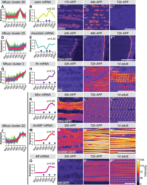 A transcriptomics resource reveals a transcriptional
