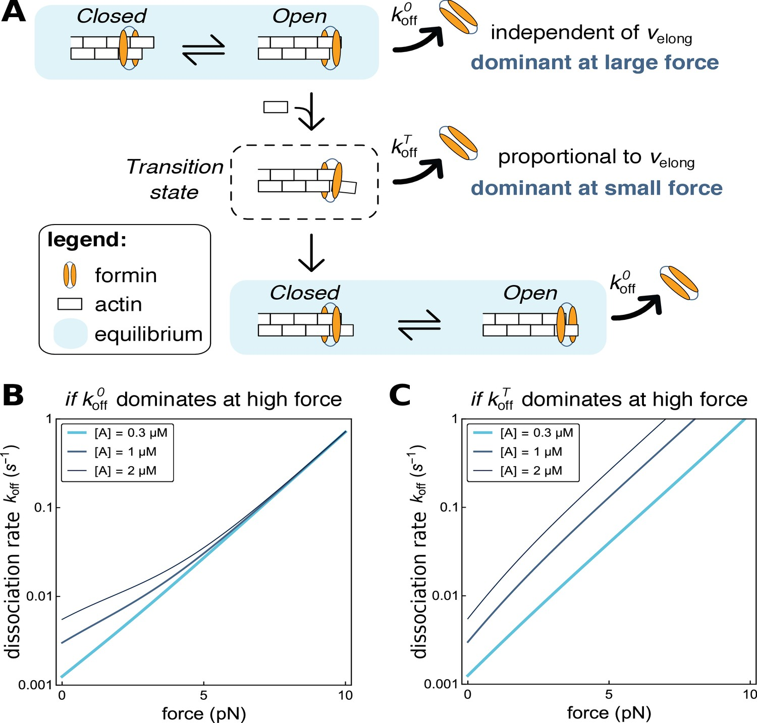 Modulation of formin processivity by profilin and mechanical tension