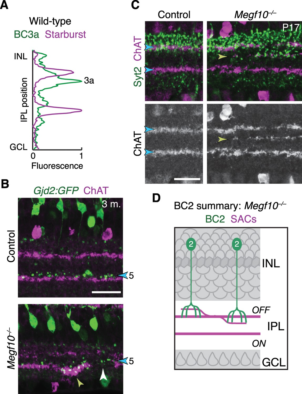 Formation Of Retinal Direction Selective Circuitry Initiated By 60 Hz Band Reject Filter Public Circuit Online Simulator Ipl Innervation Ds Bipolar Cells In Megf10 Mutants