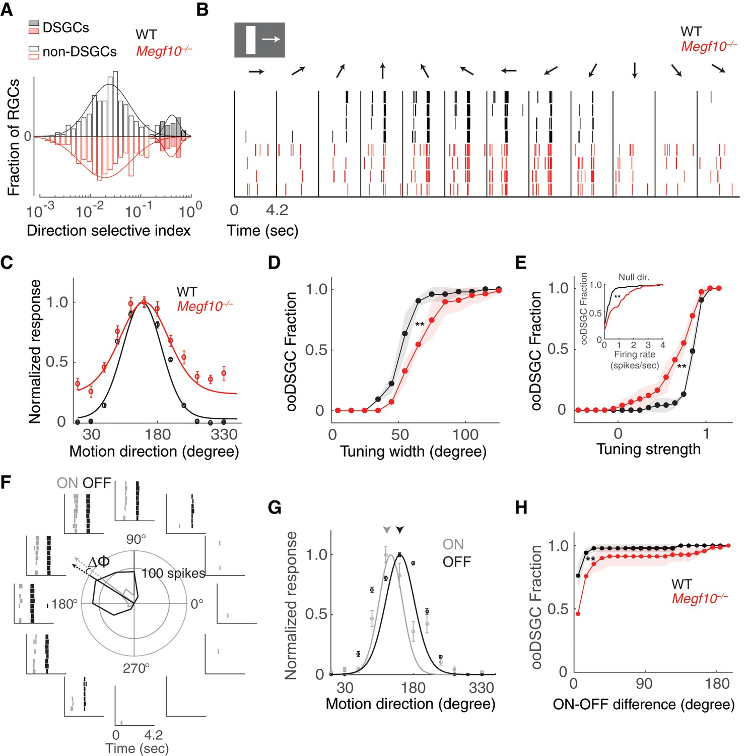 Formation Of Retinal Direction Selective Circuitry Initiated By Cambridge 302 Wiring Diagram Broader And Weaker Tuning Oodsgcs In Megf10 Mutants