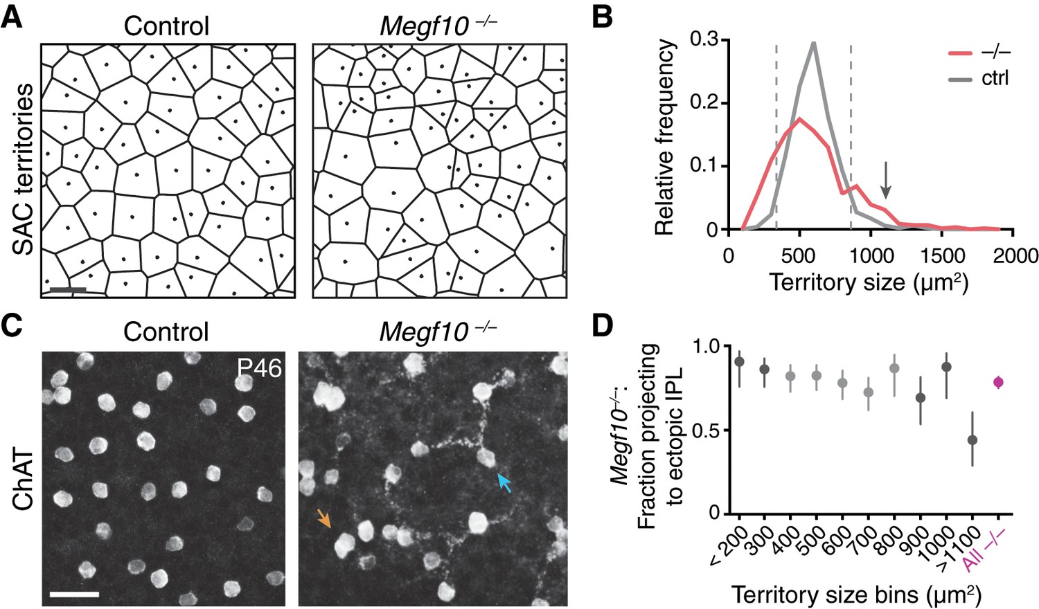 Formation Of Retinal Direction Selective Circuitry Initiated By Series And Parallel Circuits Must Be Applied Selectively To Severity Megf10 Sac Mosaic Phenotype Does Not Correlate With Ipl Targeting Error Rate