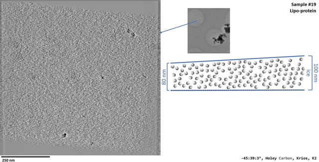 Routine single particle CryoEM sample and grid